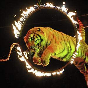 Цирки Звенигово